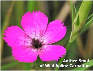 Wildflower Health Watch